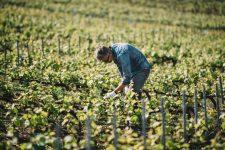 Spring Training | Vallée de la Marne | Champagne