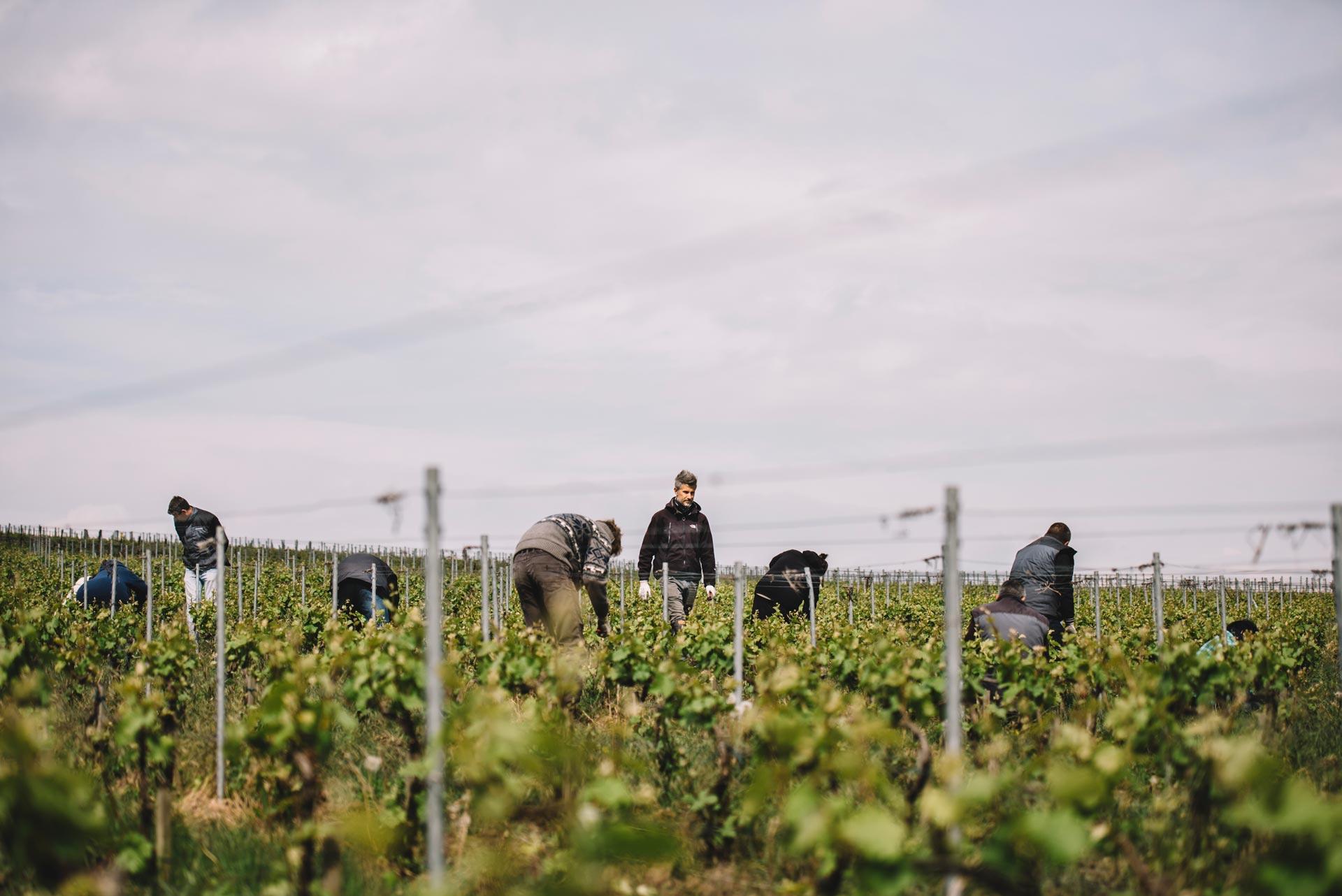 Spring training | La Montaigne de Reims | Champagne