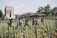 Spring training | Clos Fourtet | Saint Émilion | Bordeaux
