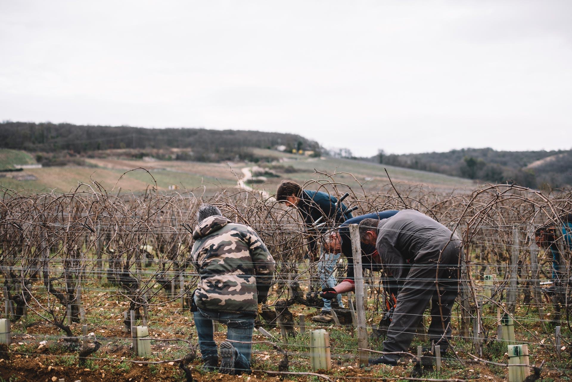 On field tutoring   Domaine Leroy   Romanée Saint Vivant   Bourgogne