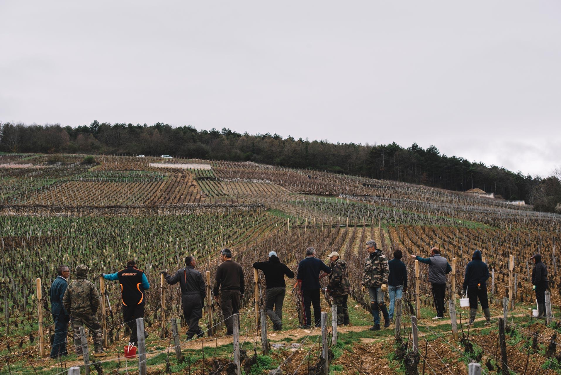 On field tutoring   Domaine Leroy   Richebourg   Bourgogne