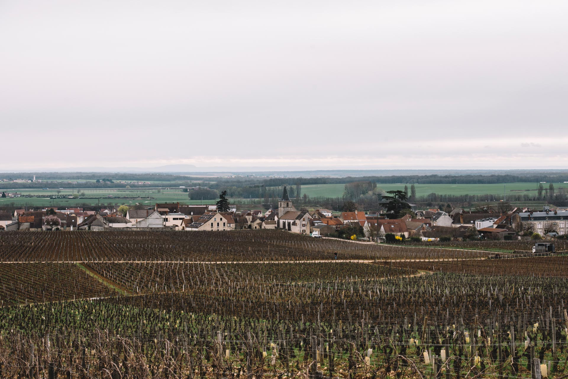 Vosne-Romanée   Bourgogne