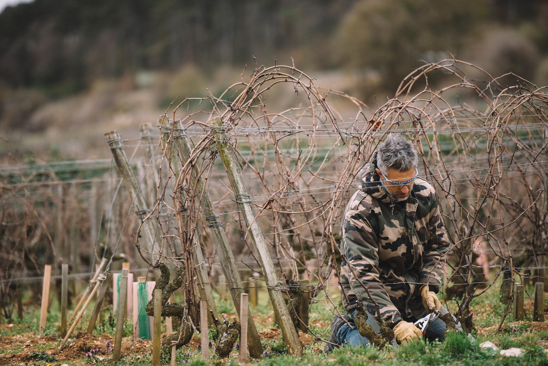 On field tutoring   Domaine d'Auvenay   Bonnes Mares   Bourgogne
