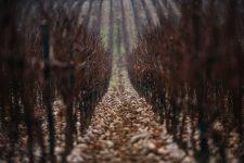Ca del Bosco terroir | Franciacorta | Lombardia | Italy