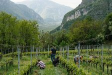 Formazione in Vigna, Ferrari, Trentino Italia