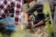 Grafting technical training | Château Pontet-Canet | Pauillac | Bordeaux