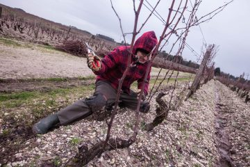 The Simonit&Sirch Method in the vines of the world's most precious white wine