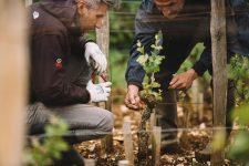 Tutoraggio in vigna | Domaine Leroy | Chambertin | Bourgogne