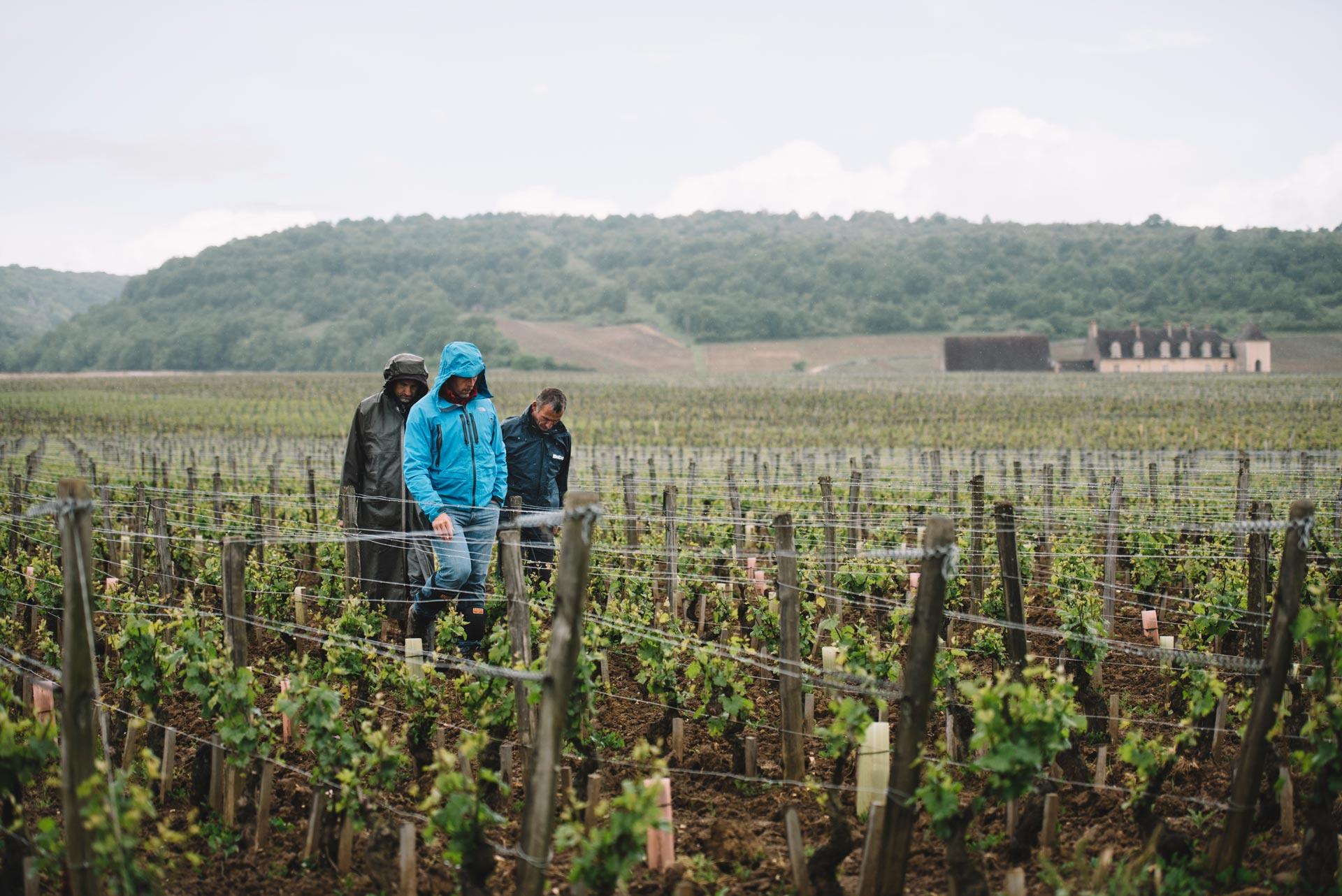 Tutoraggio in vigna   Domaine Leroy   Clos de Vougeot   Bourgogne