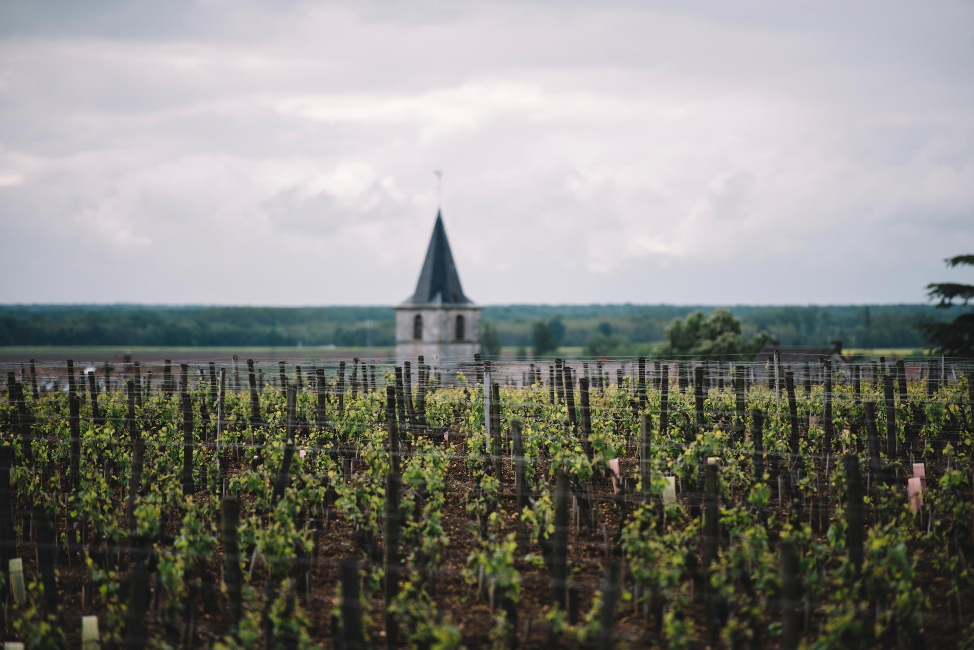 Tutoraggio in vigna   Domaine Leroy   Vosne-Romanée   Bourgogne