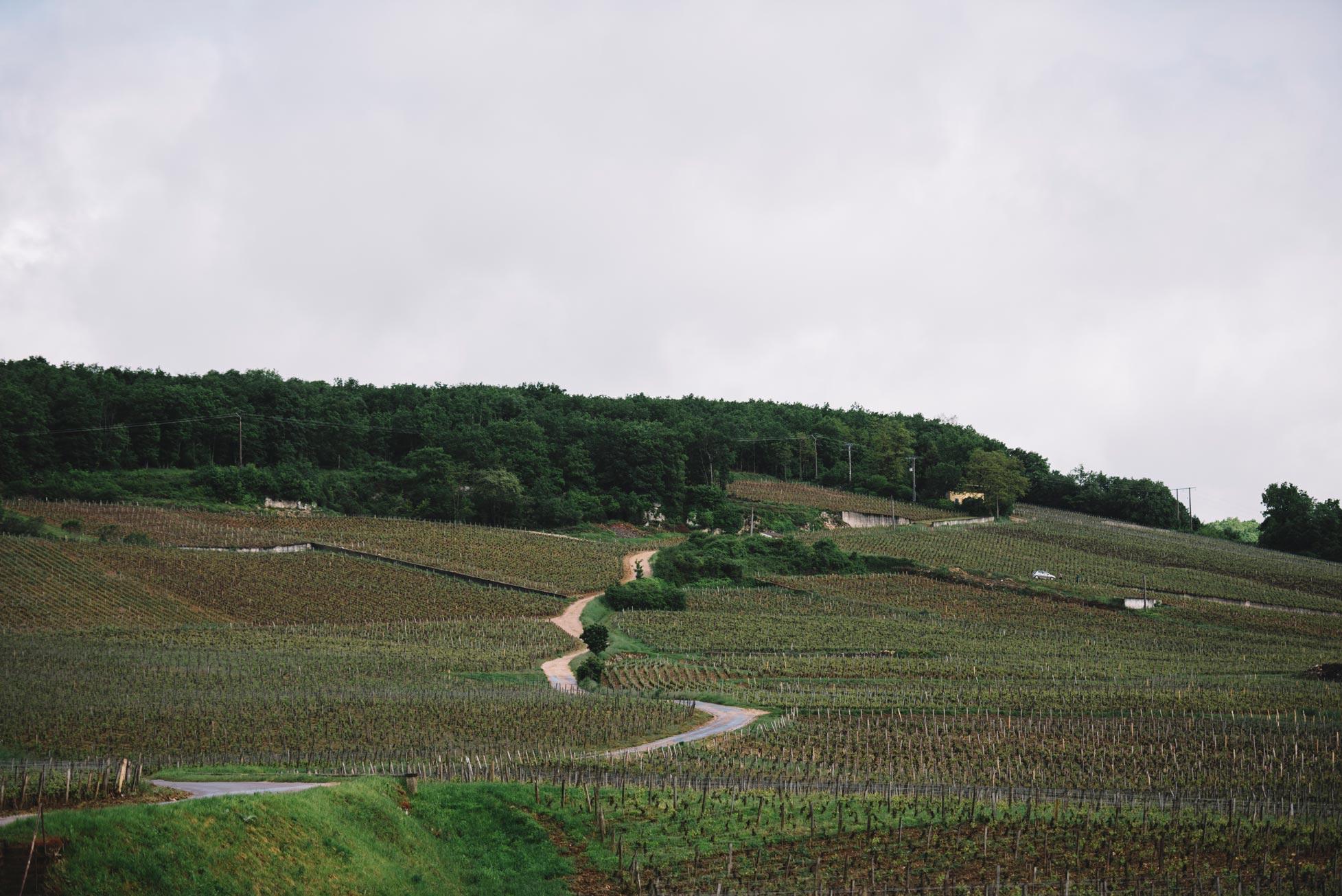 Domaine Leroy   Vosne-Romanée   Côte de Nuits   Bourgogne