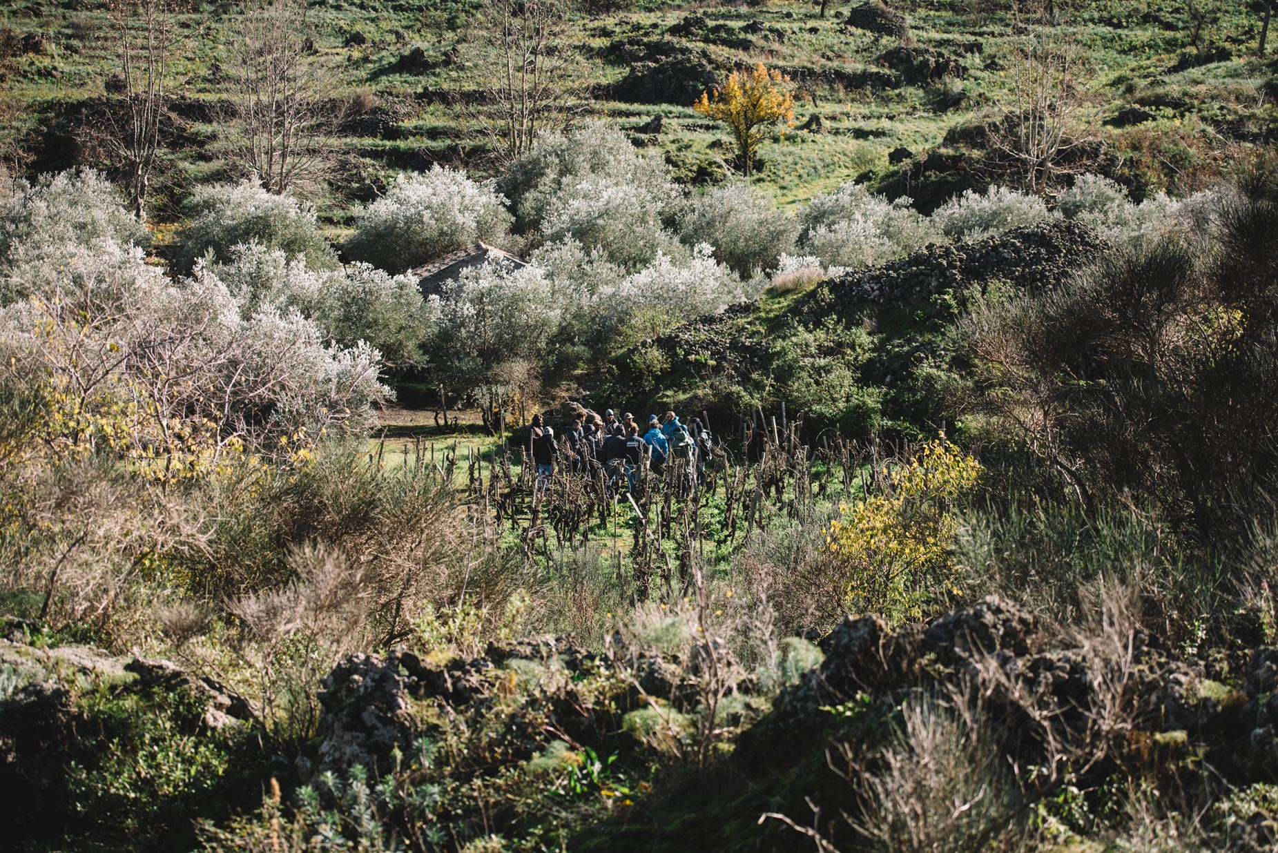 Pruning Practice   Planeta   Passopisciaro   Sicilia