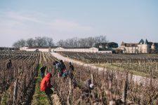Winter training   Château d'Yquem   Sauternes   Bordeaux