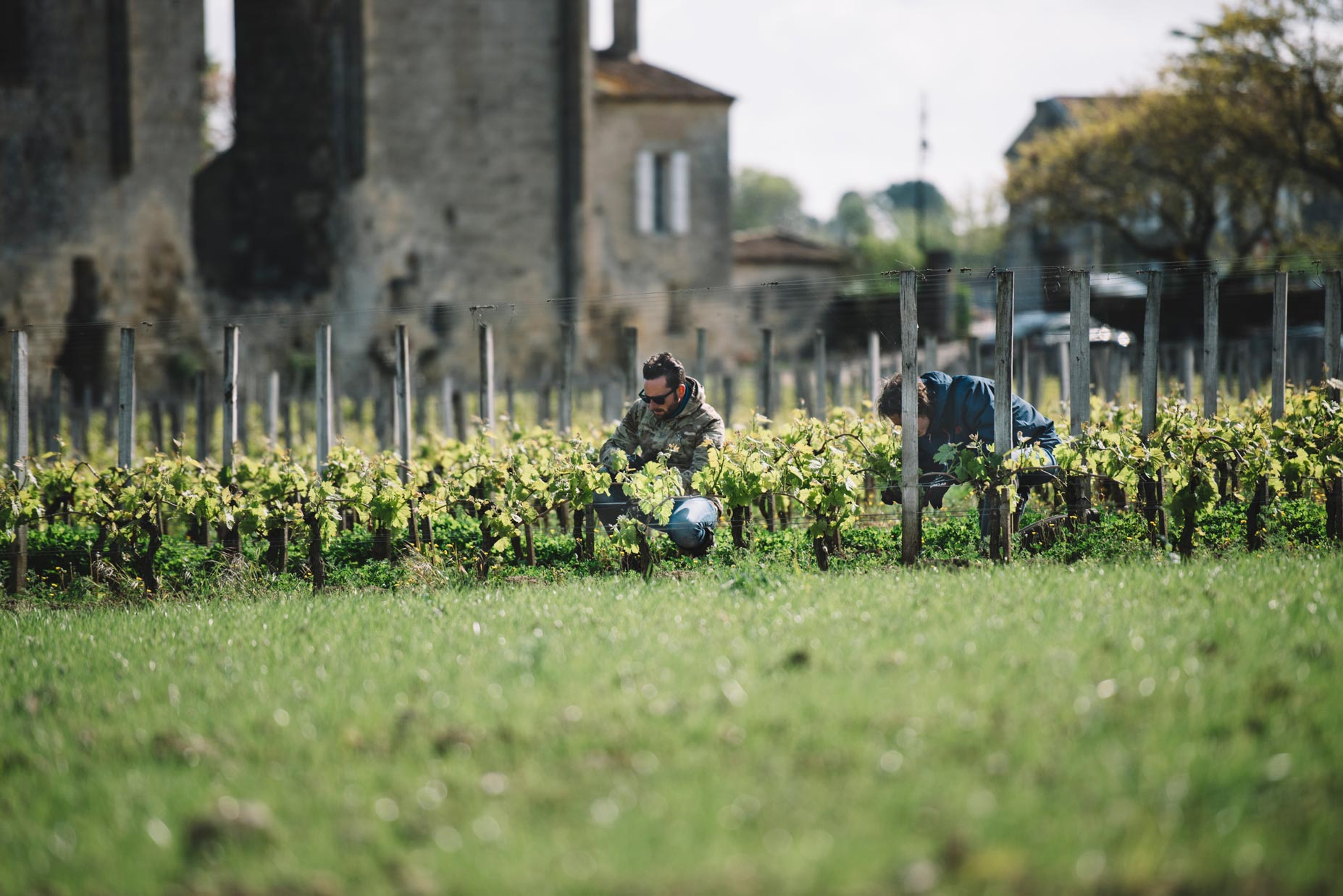 Spring training | Château Les Grandes Murailles | Saint Émilion | Bordeaux