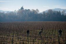 On field tutoring   Ca del Bosco   Franciacorta   Italy