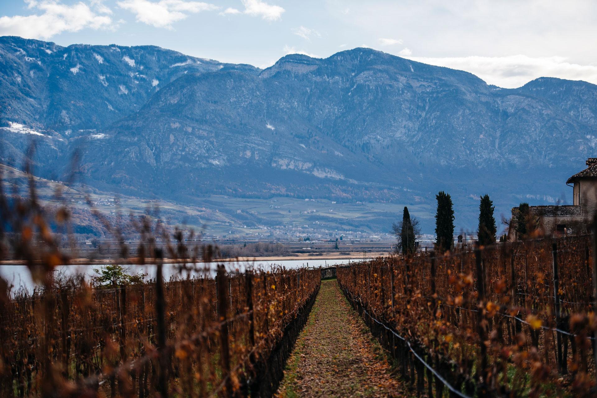 Manincor vineyards | Caldaro | Alto Adige | Italy