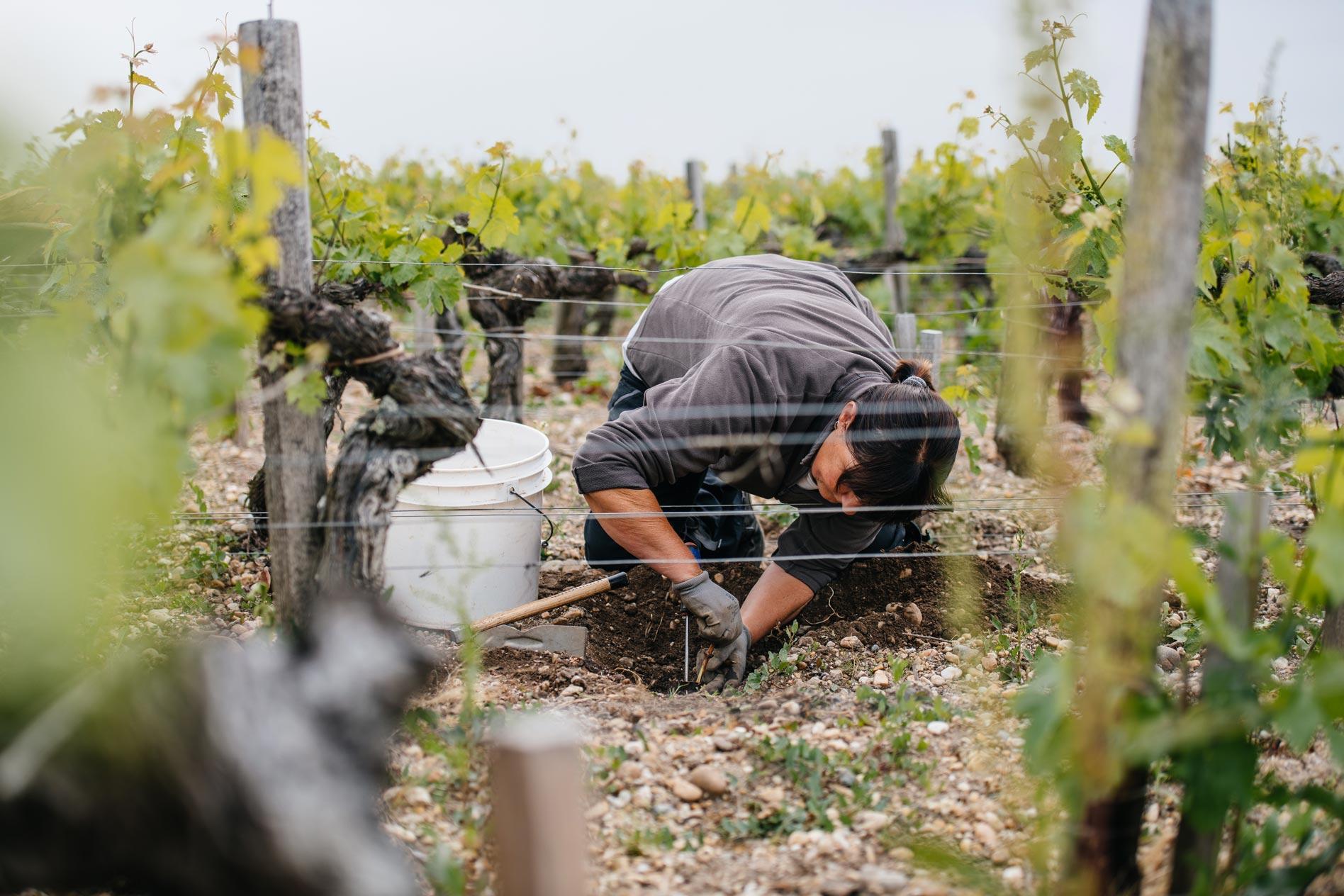Grafting technical training   Château Pontet-Canet   Pauillac   Bordeaux