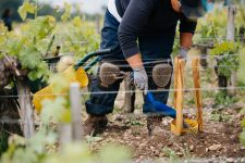 Grafting technical training | Château Pontet-Canet | Pauillac | Bordeaux