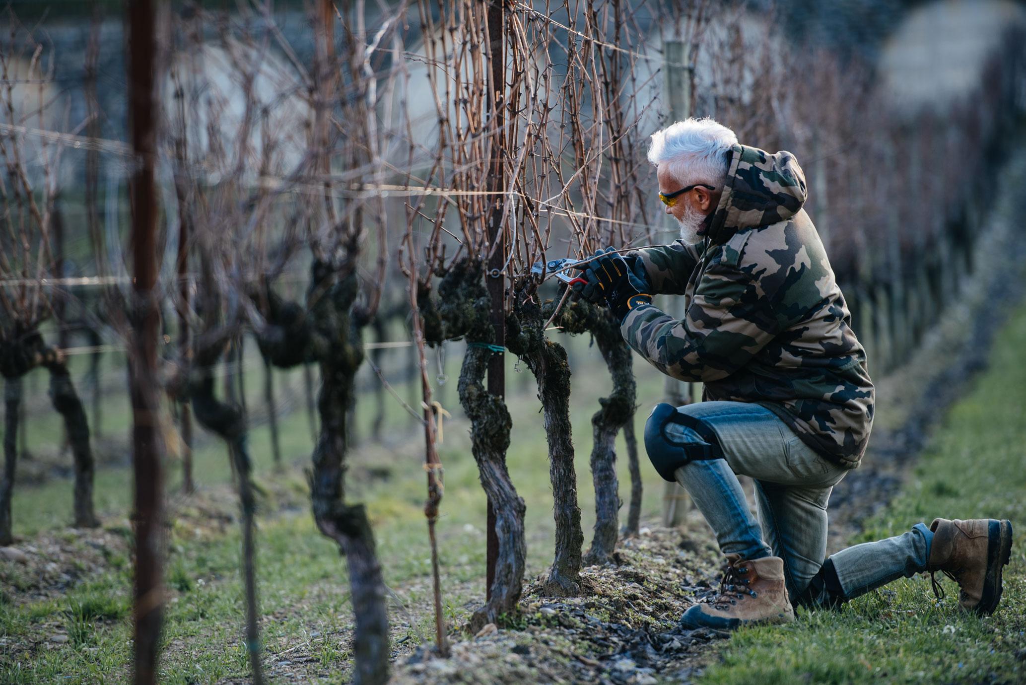 Winter training | Bellavista | Franciacorta